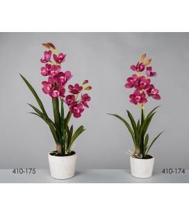 Planta decorativa orquídea púrpura