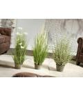 Flores y plantas decorativas